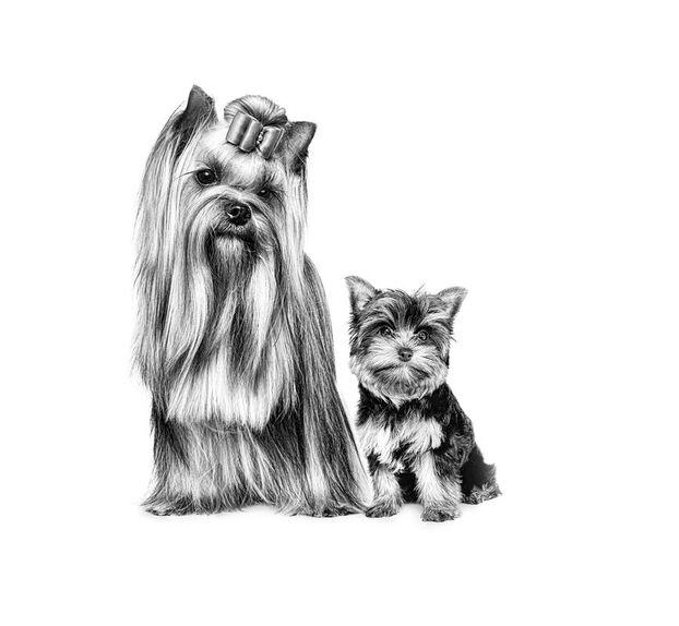 Les valeurs de Royal Canin